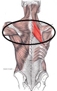 Rhomboidei midden rug rugoefeningen fitness
